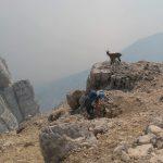 Ferrata Amalia 18 climb montasio