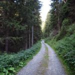 Ferrata Camino Ghiacciaio Forestale