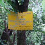 Deanna Orlandini Ferrata Wild boar sign