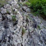 Ferrata Madonnina Coren 28 ultimo tratto 10 metri parete