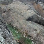 Ferrata Rocca Bianca 13