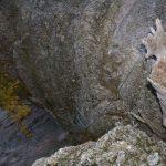 Ferrata Rocca dei Corvi 44 descent