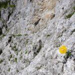 Ferrata Stella Alpina 47 bolli gialli e vero attacco