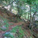 Ferrata Vajo Scuro 56 avvicinamento bosco