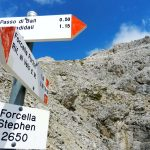 Forcella Stephen