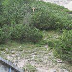 Aided path Olivato Miaron 2 normal olive-oil saddle
